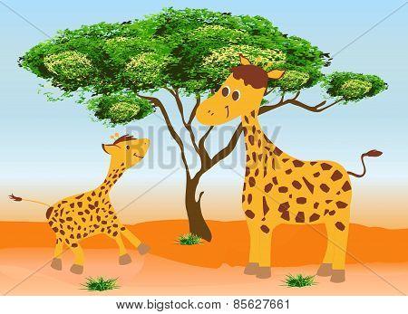 Two giraffes,