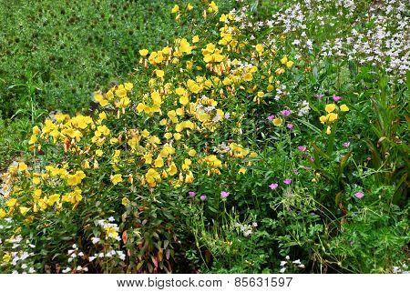 Alpinum Garden