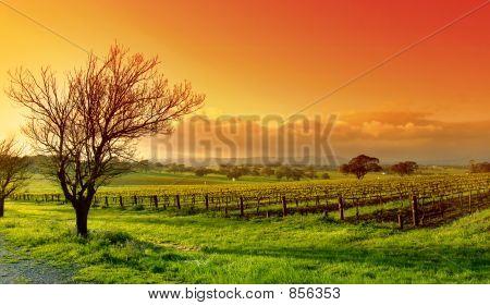 Paisaje vitivinícola
