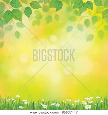 Vector Sunshine Background With Chamomile And Dandelion.