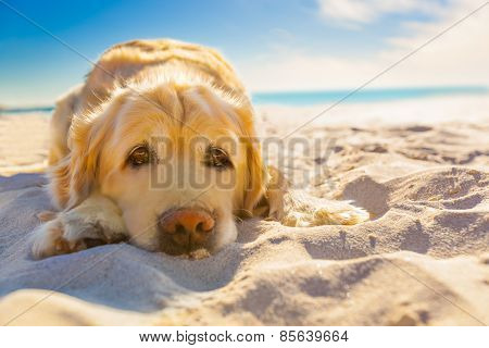 Dog Relaxing