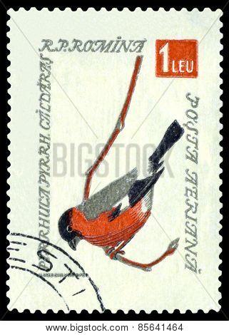 Vintage  Postage Stamp. Eurasian Bullfinch.