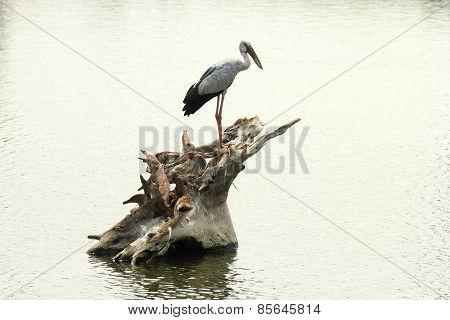 Bird and Tree Stump