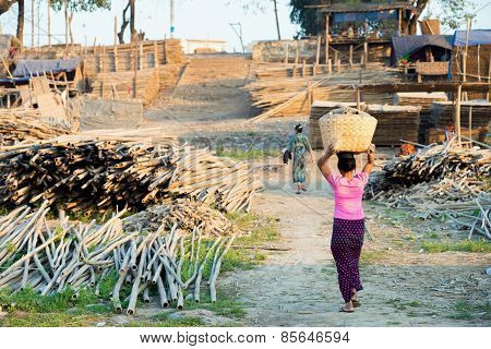 Transportation Of Bamboo Logs