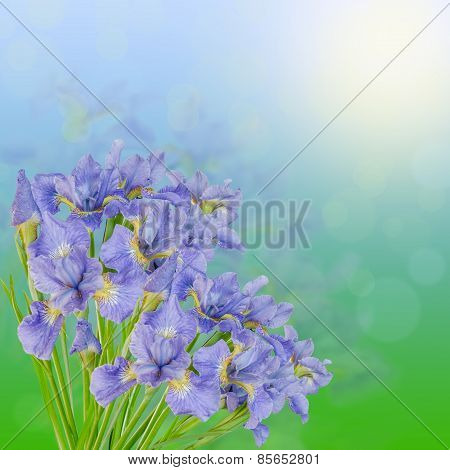 Beautiful Bouquet Of Blue Irises On The Green And Heavenly Background