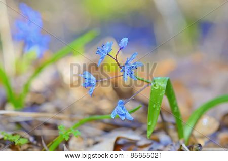 macro violet flowers in forest