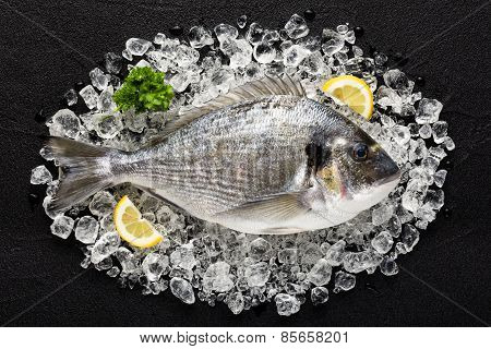 Fresh Dorado Fish On Ice On A Black Stone Table Top View