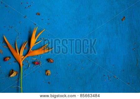 Yellow Flower With Rose Buds And Shuck On Blue Wooden Background. .