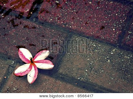 Flower and bricks