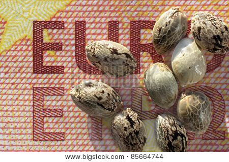 Ten Euro Banknote And Hemp Seeds