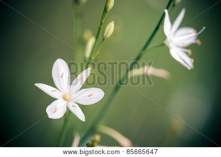 Beatiful Wild Flower In Green Meadow