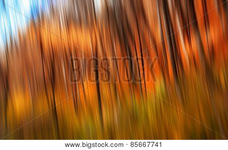 Trees In An Autumn Forest