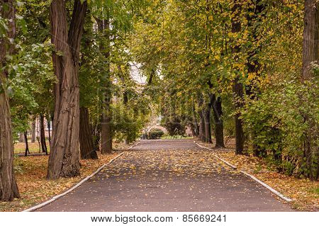 Small Road In An Autumn Park