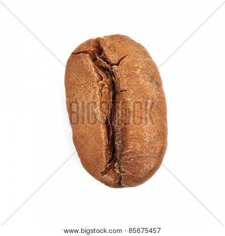Single coffee bean isolated on white background