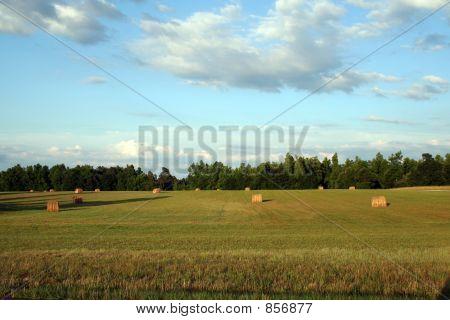 Fresh Pasture