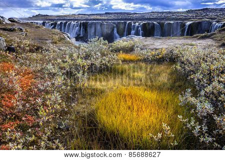 Colorful patch of grass with Sellfoss waterfall in the backdrop. Iceland