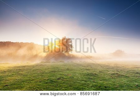Fantastic foggy river with fresh green grass in the sunlight. Dramatic colorful scenery. Seret river, Ternopil. Ukraine, Europe. Beauty world. Retro style filter. Instagram toning effect.