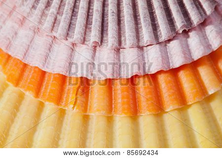 background of various  colorful sea shells macro