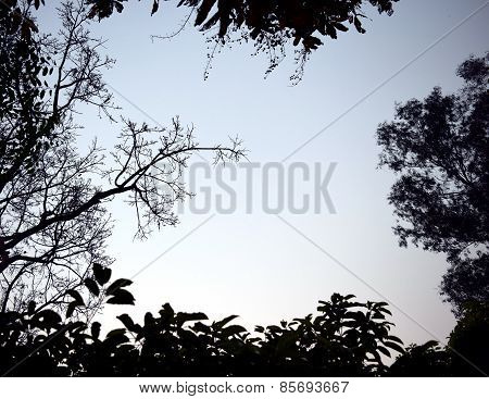 Backlit treetop Black like a picture frame