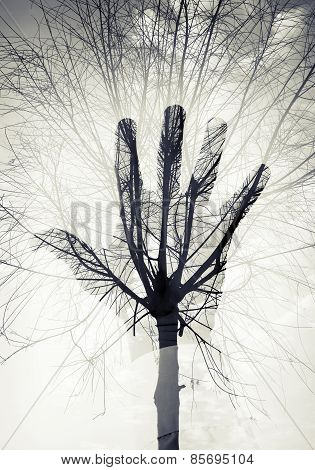 Male Hand Silhouette Over Sky And Leafless Tree Pattern