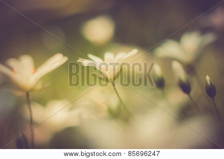 Vintage Photo Of Beautiful Small Flowers. Useful As Background