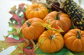 image of corn stalk  - pumpkins and indian corn with autum leaves - JPG