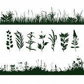 stock photo of biodiversity  - silhouettes meadow grass and twigs of plants - JPG