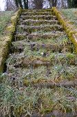 image of staircases  - abandoned staircase covered with grass leaf litter and moss - JPG