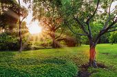 pic of grass area  - Sunset in park with sunlight trees and green grass - JPG