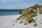 stock photo of falklands  - White sandy beach in Yorke Bay close to Stanley - JPG