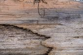 picture of driftwood  - Closeup of section of driftwood with embedded sand - JPG