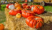 picture of haystack  - Assorted pumpkins from the fall harvest laying on the haystack - JPG