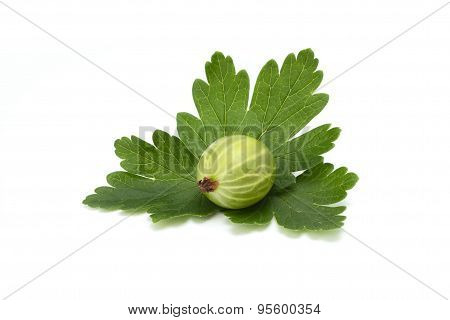 ripe green gooseberries