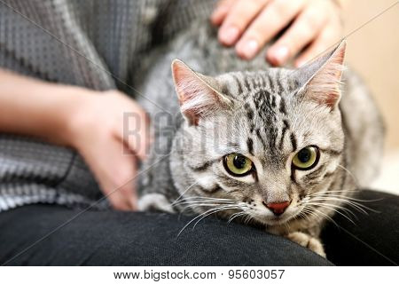Woman holding cute cat close up
