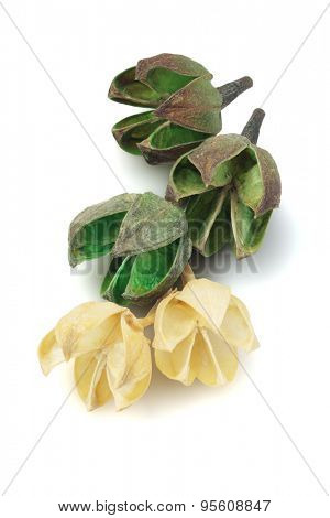 Dried Flower Seed Pods on White Background