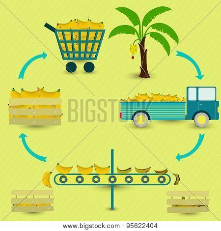 Process Of Banana