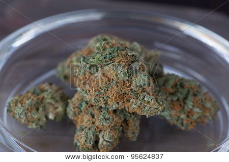 Blueberry Headband Medical Marijuana