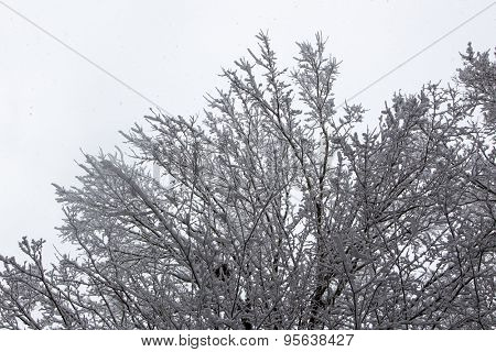 A winter landscape showing snow falling on a winter day