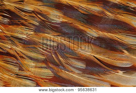 Texture of bird feathers