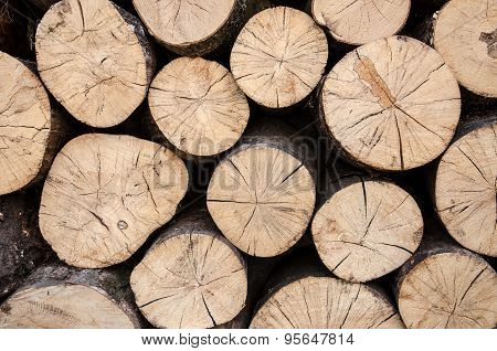 Abstract Photo of Natural Wooden Logs
