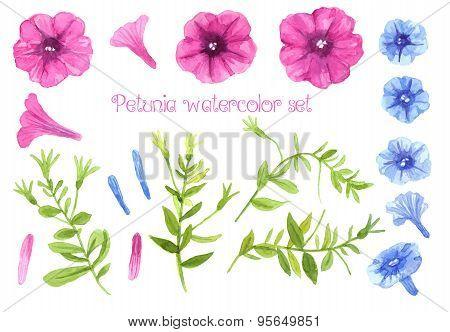 Petunia Watercolor Set
