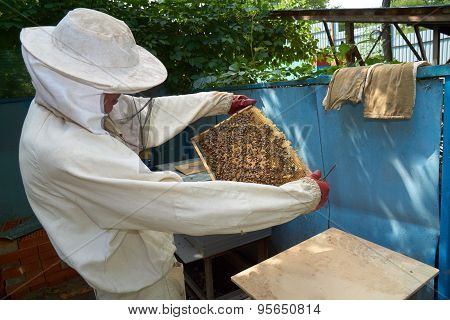 Beekeeper Looks At The Frame