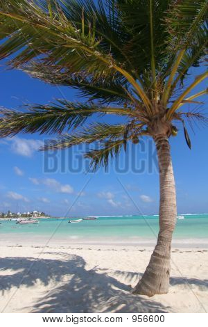 Beach And Palm Tree