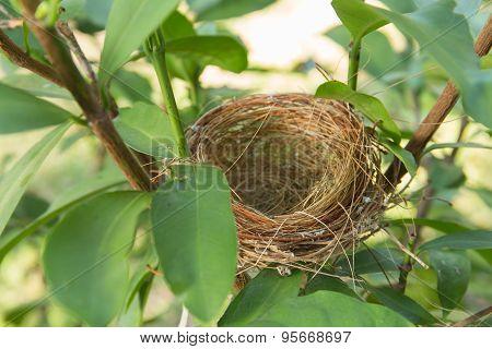 Empty Bird Nest
