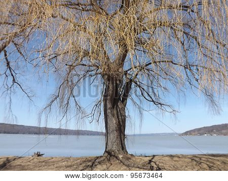 Willow Tree at the end of a Lake