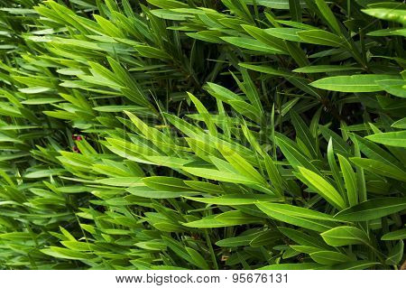 Wall covered by decorative plants - abstract background