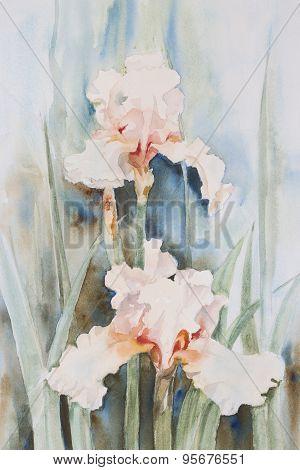 Original watercolour, white irises.