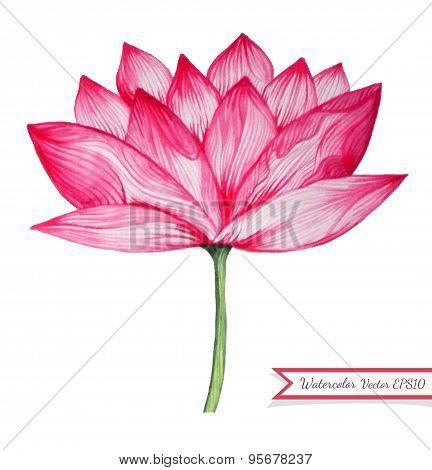Watercolor Pink Lotus