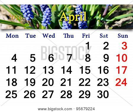 Calendar For April Of 2016 With Muscari