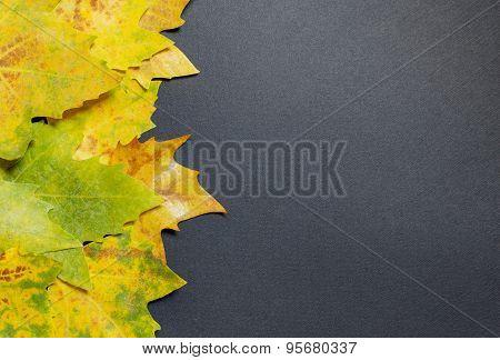 Autumn Leaf On Gray Background